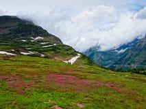 在摇石通行证,冰川国家公园的野花 免版税库存照片