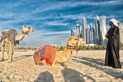 在摩天大楼背景的骆驼在海滩 库存照片