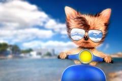 在摩托车的狗有旅行背景 免版税库存图片