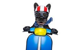 在摩托车的狗 免版税库存照片