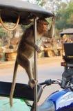 在摩托车的猴子 免版税库存照片