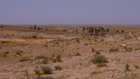在撒哈拉大沙漠、棕榈树和沙漠植物上的有薄雾的阴霾在天空背景 股票视频