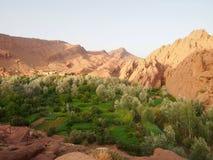 在撒哈拉大沙漠游览Merzuga,Ma中间的一片绿色绿洲 库存图片