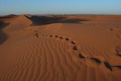 在撒哈拉大沙漠的步 免版税库存图片