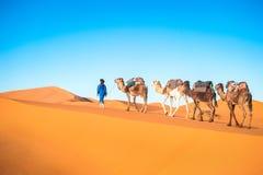 在撒哈拉大沙漠的骆驼有蓬卡车 库存照片