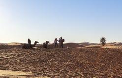 在撒哈拉大沙漠,摩洛哥的骆驼有蓬卡车 库存照片