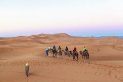 在撒哈拉大沙漠,摩洛哥的骆驼有蓬卡车 图库摄影