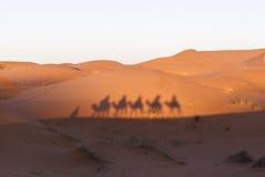 在撒哈拉大沙漠,摩洛哥的骆驼有蓬卡车 免版税库存图片