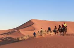 在撒哈拉大沙漠,摩洛哥的骆驼有蓬卡车 免版税图库摄影