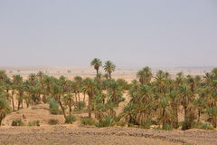 绿洲在撒哈拉大沙漠,陶陶的沙漠 库存图片