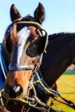 在支架展示的马与马眼罩 库存照片