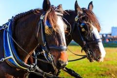 在支架展示的马与马眼罩 免版税库存图片