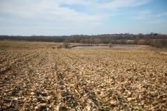 在收获以后的空的干燥玉米田 免版税库存照片