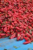 在收获以后的红色辣椒粉 免版税库存照片
