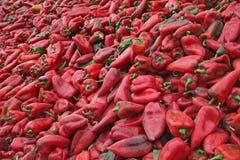 在收获以后的红色辣椒粉 库存照片