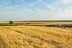 在收获在一秋天天的麦子以后的亩茬地 免版税库存图片