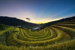 在收获季节的露台的米领域在日落在Mu Cang柴,越南 库存图片