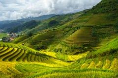 在收获季节的露台的米领域在Mu Cang柴,越南 免版税库存照片
