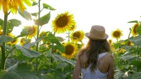 在收获期间,少年在阳光下享受向日葵领域的秀丽暑假 股票录像