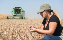 年轻在收获期间的农夫女孩examing的大豆植物 免版税库存照片