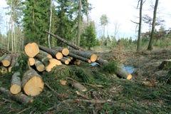 在收获木头以后的Moutain森林 免版税库存照片
