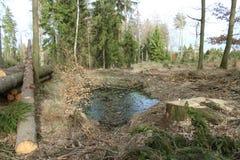 在收获木头以后的Moutain森林 免版税库存图片