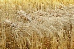 在收获的麦子捆 免版税图库摄影