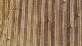 在收获领域,方形的秸杆大包,从上面看法的鸟瞰图,今后慢慢地飞行 股票录像