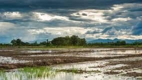 在收获以后的米领域与蓝天 库存图片