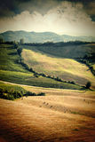 在收获以后葡萄酒视图调遣, Toscany,意大利 库存图片