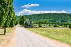 在放牧的领域中的路 风景乡下 免版税库存照片