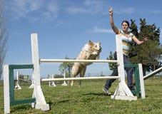 在敏捷性的博德牧羊犬 库存照片