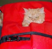 在救生衣的猫 免版税库存图片