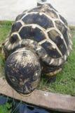 在教会前面的乌龟雕象 库存照片