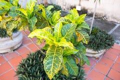 在教会前面的装饰植物在圣克拉拉,古巴 库存图片