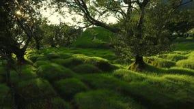 在教会附近的美丽的绿色庭院在冰岛 股票视频