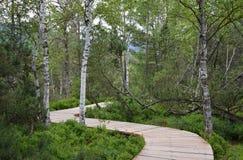 在教育足迹Chalupska板条的木人行桥 免版税图库摄影