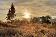 在散开光的秋天早晨 免版税库存图片