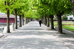 在散步的两边栗树 免版税库存图片
