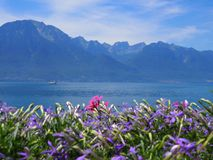 在散步的秀丽五颜六色的花在莱芒湖的蒙特勒市在瑞士 免版税图库摄影