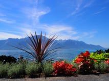 在散步的秀丽五颜六色的花在莱芒湖的蒙特勒市在瑞士 免版税库存图片