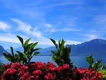 在散步的秀丽五颜六色的花在莱芒湖的蒙特勒市在瑞士 库存图片