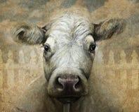 在数字式多媒体和木炭的母牛画象 库存照片