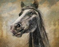 在数字式多媒体和木炭的马画象 免版税库存图片