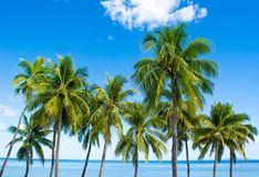 在斐济海滩的热带看法 免版税库存照片