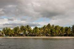 在斐济的海岸线的棕榈树 免版税库存照片