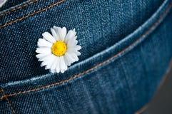 在斜纹布口袋的一朵雏菊 免版税库存图片