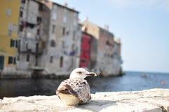 在断裂的海鸥 库存照片