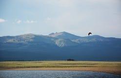 在斯内克河上的白头鹰飞行 图库摄影