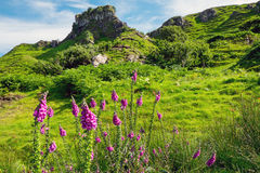 在斯凯岛小岛的神仙的幽谷  库存图片